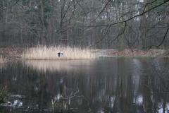 Hotel-De-Volksabdij-011-Visvijver-in-het-bos