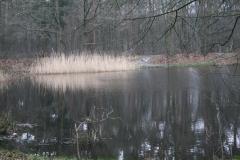 Hotel-De-Volksabdij-013-Visvijver-in-het-bos