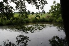 Meerssen-Raar-024-Poel-met-waterlelies