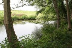 Meerssen-Raar-025-Poel-met-waterlelies